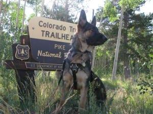 Wyatt Ray Dawg on the Trail