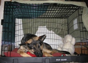 Wyatt in The Other Door Dog Crate