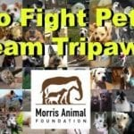 Fight K9 Cancer With Me and Team Tripawds, Pretty Please