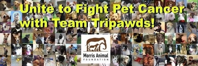 Team Tripawds fight canine cancer