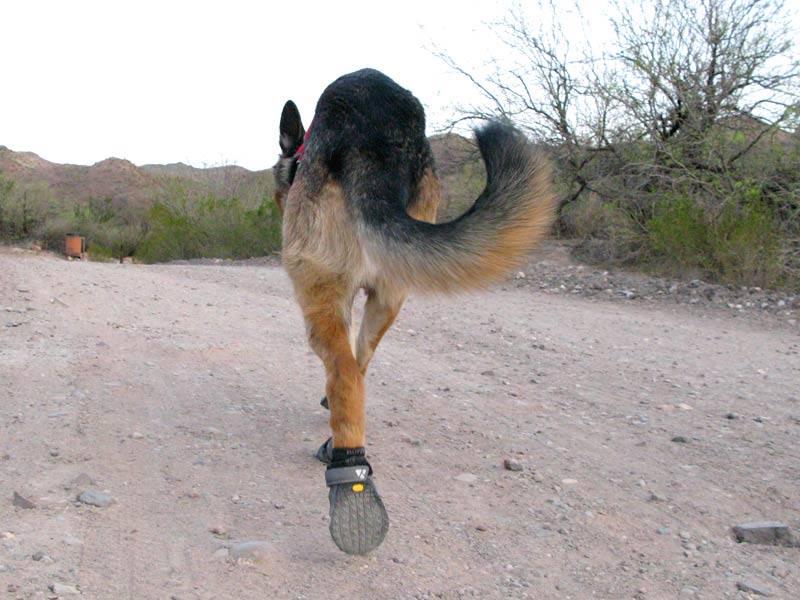 Tripawd German Shepherd Ruffwear boots