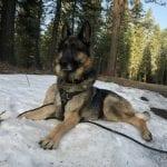 Get Ready: Wild Tripawd Boy Meets Wild Alaska