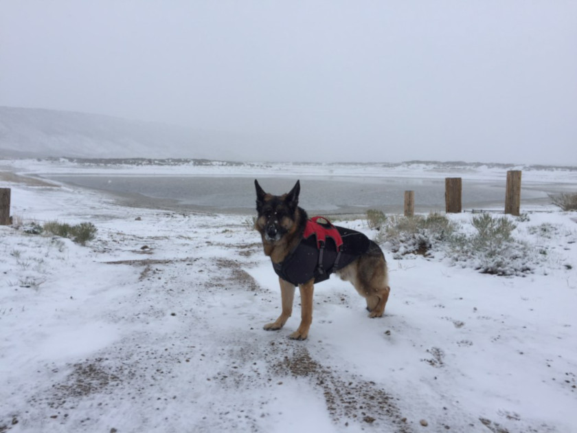 My Tripawd loves snow