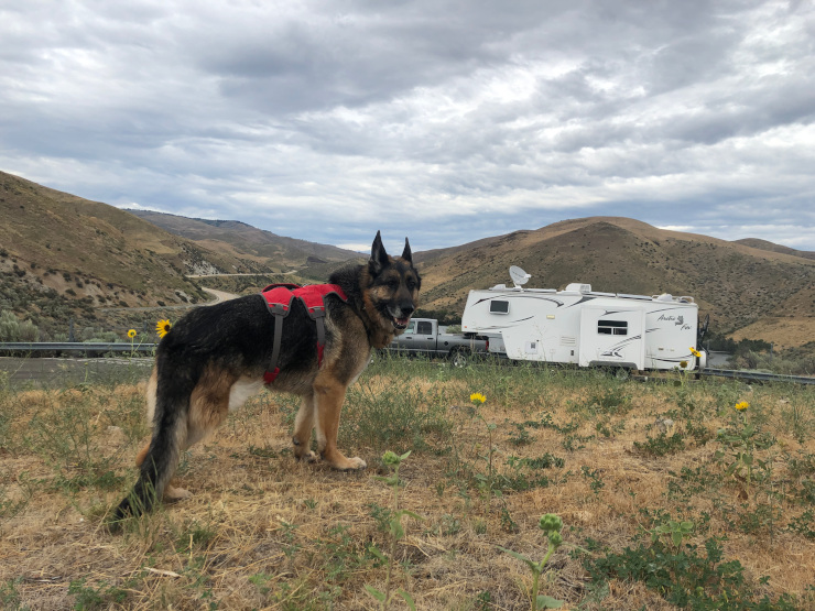 dangers of RVing with dogs