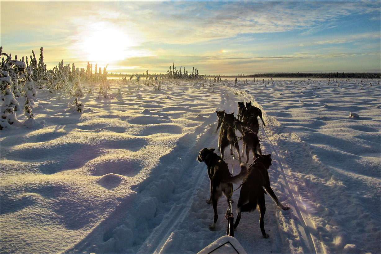 Sundog Sled Dog